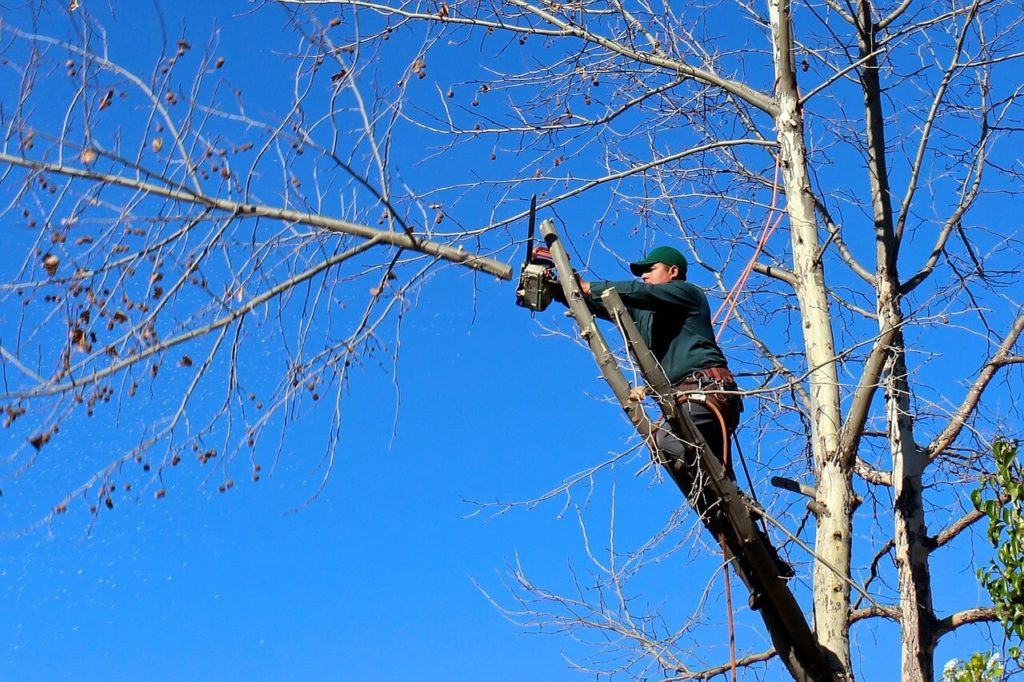Contact Us-West Little River FL Tree Trimming and Stump Grinding Services-We Offer Tree Trimming Services, Tree Removal, Tree Pruning, Tree Cutting, Residential and Commercial Tree Trimming Services, Storm Damage, Emergency Tree Removal, Land Clearing, Tree Companies, Tree Care Service, Stump Grinding, and we're the Best Tree Trimming Company Near You Guaranteed!