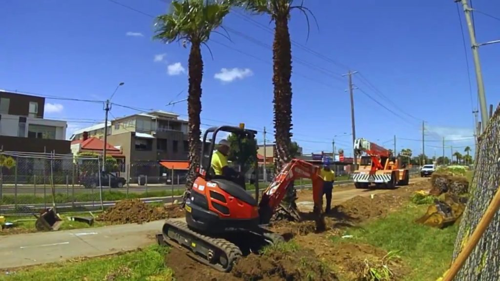 Palm Tree Removal-West Little River FL Tree Trimming and Stump Grinding Services-We Offer Tree Trimming Services, Tree Removal, Tree Pruning, Tree Cutting, Residential and Commercial Tree Trimming Services, Storm Damage, Emergency Tree Removal, Land Clearing, Tree Companies, Tree Care Service, Stump Grinding, and we're the Best Tree Trimming Company Near You Guaranteed!