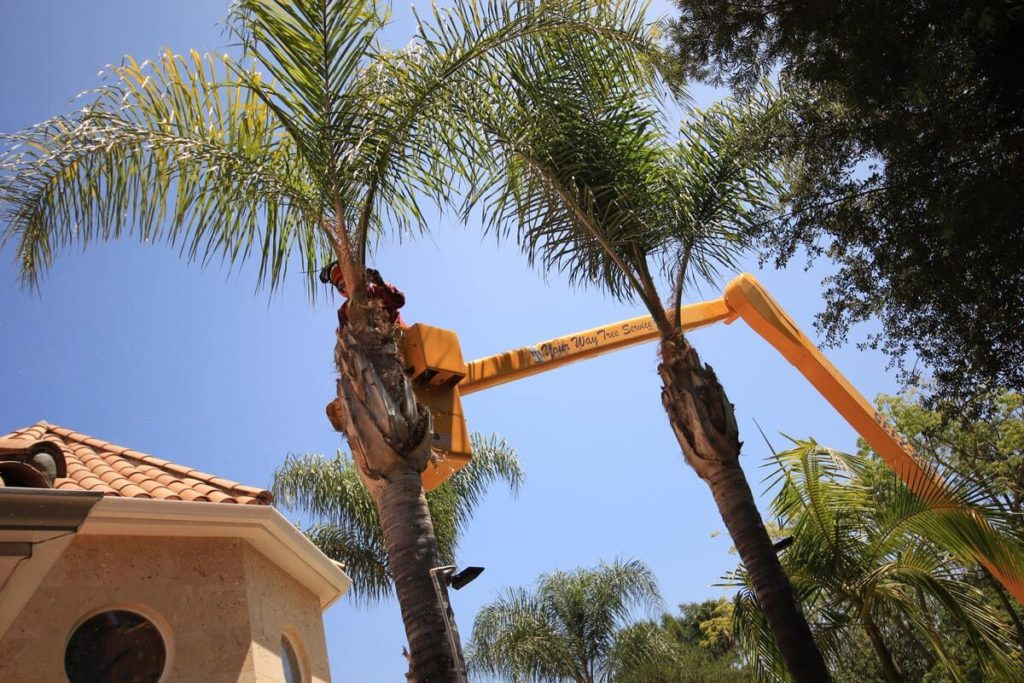 Palm Tree Trimming-West Little River FL Tree Trimming and Stump Grinding Services-We Offer Tree Trimming Services, Tree Removal, Tree Pruning, Tree Cutting, Residential and Commercial Tree Trimming Services, Storm Damage, Emergency Tree Removal, Land Clearing, Tree Companies, Tree Care Service, Stump Grinding, and we're the Best Tree Trimming Company Near You Guaranteed!