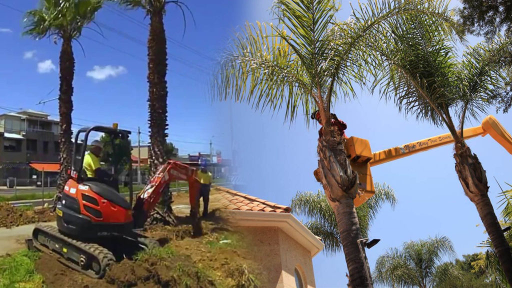 Palm tree trimming & palm tree removal-West Little River FL Tree Trimming and Stump Grinding Services-We Offer Tree Trimming Services, Tree Removal, Tree Pruning, Tree Cutting, Residential and Commercial Tree Trimming Services, Storm Damage, Emergency Tree Removal, Land Clearing, Tree Companies, Tree Care Service, Stump Grinding, and we're the Best Tree Trimming Company Near You Guaranteed!