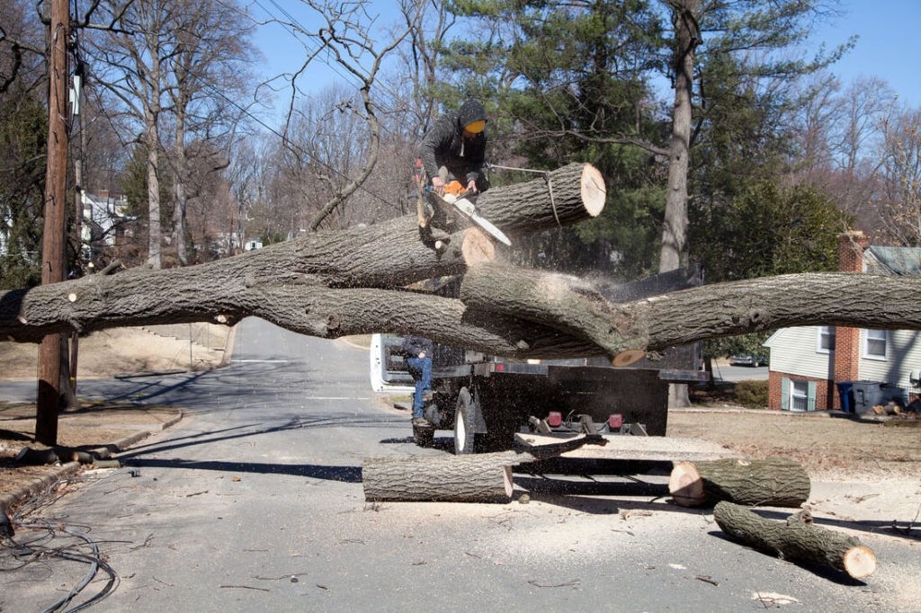 Residential Tree Services-West Little River FL Tree Trimming and Stump Grinding Services-We Offer Tree Trimming Services, Tree Removal, Tree Pruning, Tree Cutting, Residential and Commercial Tree Trimming Services, Storm Damage, Emergency Tree Removal, Land Clearing, Tree Companies, Tree Care Service, Stump Grinding, and we're the Best Tree Trimming Company Near You Guaranteed!