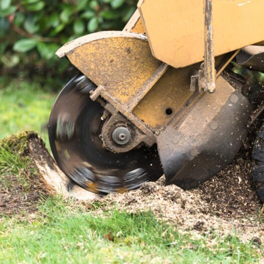 Stump Grinding-West Little River FL Tree Trimming and Stump Grinding Services-We Offer Tree Trimming Services, Tree Removal, Tree Pruning, Tree Cutting, Residential and Commercial Tree Trimming Services, Storm Damage, Emergency Tree Removal, Land Clearing, Tree Companies, Tree Care Service, Stump Grinding, and we're the Best Tree Trimming Company Near You Guaranteed!