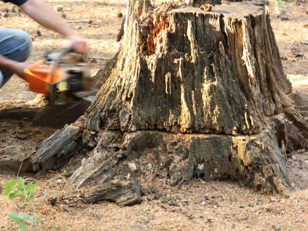 Stump Removal-West Little River FL Tree Trimming and Stump Grinding Services-We Offer Tree Trimming Services, Tree Removal, Tree Pruning, Tree Cutting, Residential and Commercial Tree Trimming Services, Storm Damage, Emergency Tree Removal, Land Clearing, Tree Companies, Tree Care Service, Stump Grinding, and we're the Best Tree Trimming Company Near You Guaranteed!