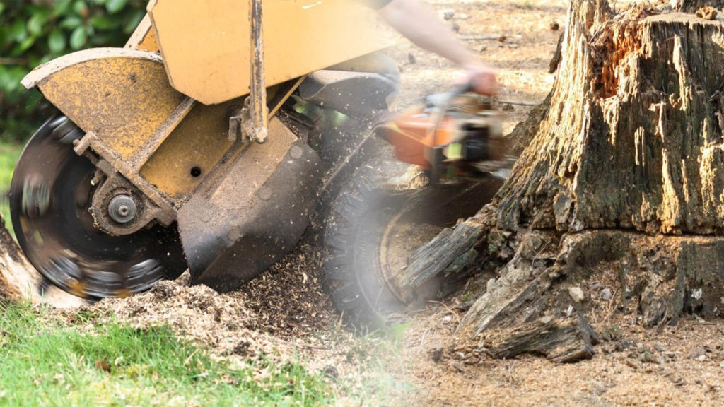 Stump grinding & removal-West Little River FL Tree Trimming and Stump Grinding Services-We Offer Tree Trimming Services, Tree Removal, Tree Pruning, Tree Cutting, Residential and Commercial Tree Trimming Services, Storm Damage, Emergency Tree Removal, Land Clearing, Tree Companies, Tree Care Service, Stump Grinding, and we're the Best Tree Trimming Company Near You Guaranteed!