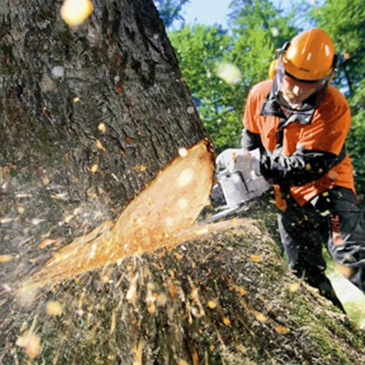 Tree Cutting-West Little River FL Tree Trimming and Stump Grinding Services-We Offer Tree Trimming Services, Tree Removal, Tree Pruning, Tree Cutting, Residential and Commercial Tree Trimming Services, Storm Damage, Emergency Tree Removal, Land Clearing, Tree Companies, Tree Care Service, Stump Grinding, and we're the Best Tree Trimming Company Near You Guaranteed!