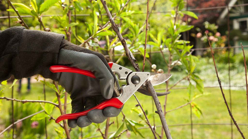 Tree Pruning-West Little River FL Tree Trimming and Stump Grinding Services-We Offer Tree Trimming Services, Tree Removal, Tree Pruning, Tree Cutting, Residential and Commercial Tree Trimming Services, Storm Damage, Emergency Tree Removal, Land Clearing, Tree Companies, Tree Care Service, Stump Grinding, and we're the Best Tree Trimming Company Near You Guaranteed!
